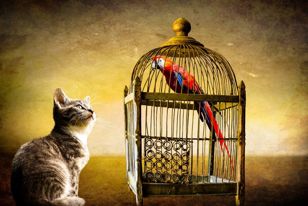 Kat kijkt naar een papegaai in een kooi